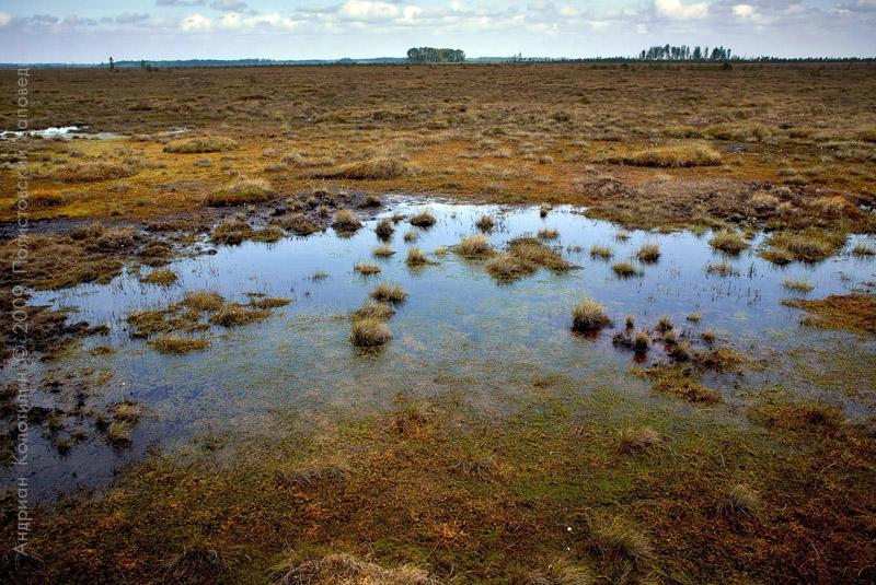 Largest Swamp in Europe