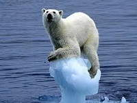 Polar Bear on Melting Ice Floe