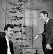 James Watson (1928-) and Francis Crick (1916-2004)